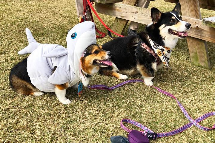 Pet Friendly OBX Brewtag
