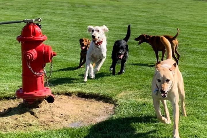 Pet Friendly Yappy Hour at PetIQ Dog Park