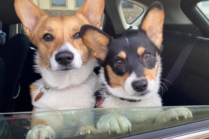 Pet Friendly Red Dog's Mutt Market