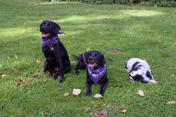 Pet Friendly Annual Walk-n-Wag