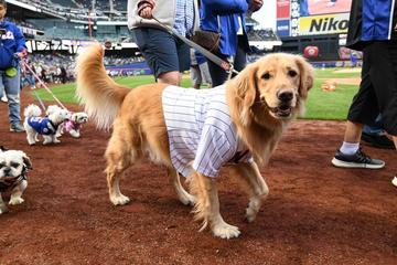 Pet Friendly Bark In The Park with the New York Mets