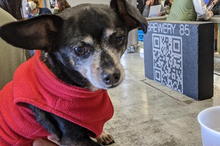 Pet Friendly The Toasty Farmer - Winter Farmers Market at Brewery 85