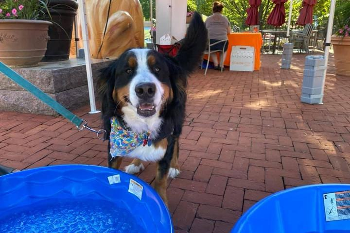 Pet Friendly Paws in the Plaza