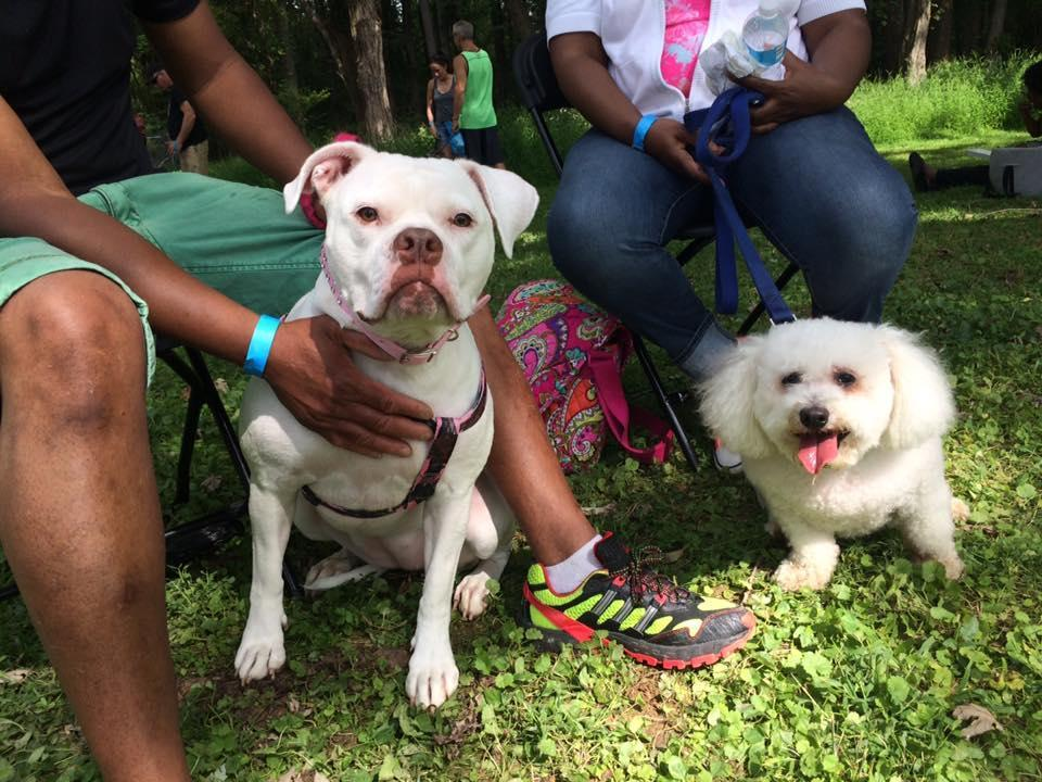 dogfest 2018 and walk