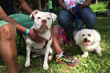 Pet Friendly Dogfest 2019 and Walk
