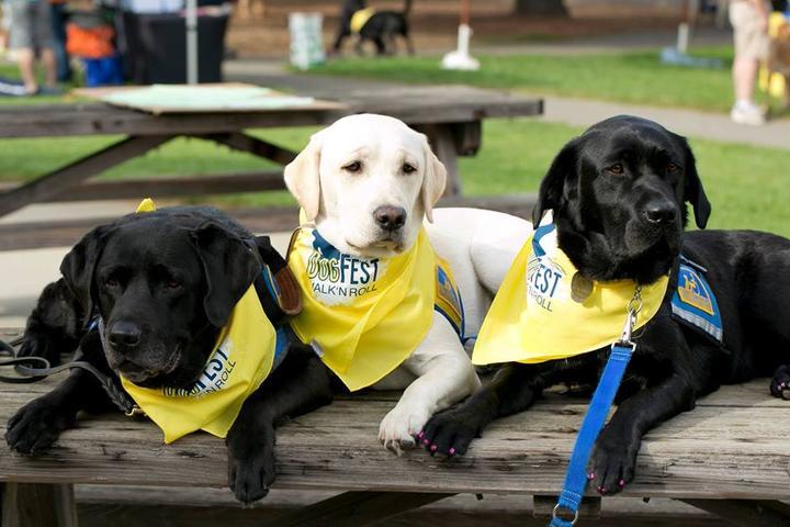 Pet Friendly DogFest Washington DC