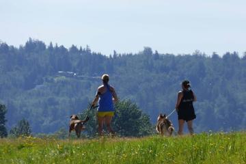 Pet Friendly Hike on the Dike