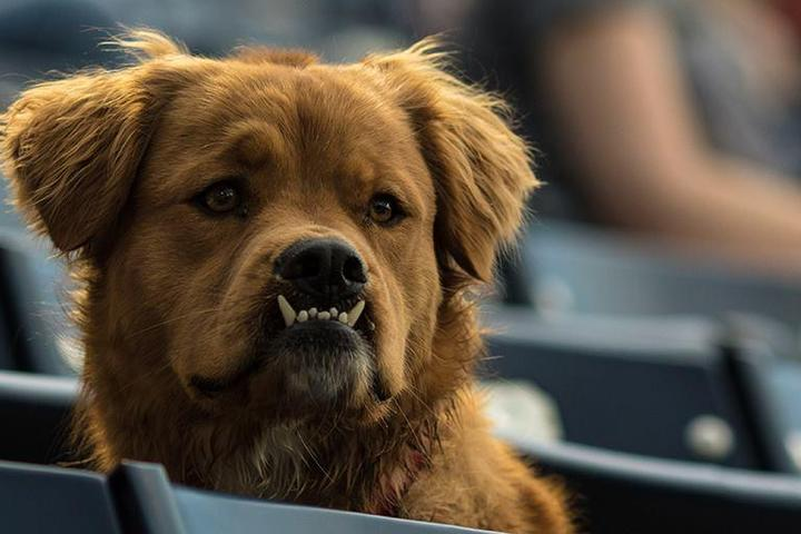 Pet Friendly Bark in the Park with Durham Bulls