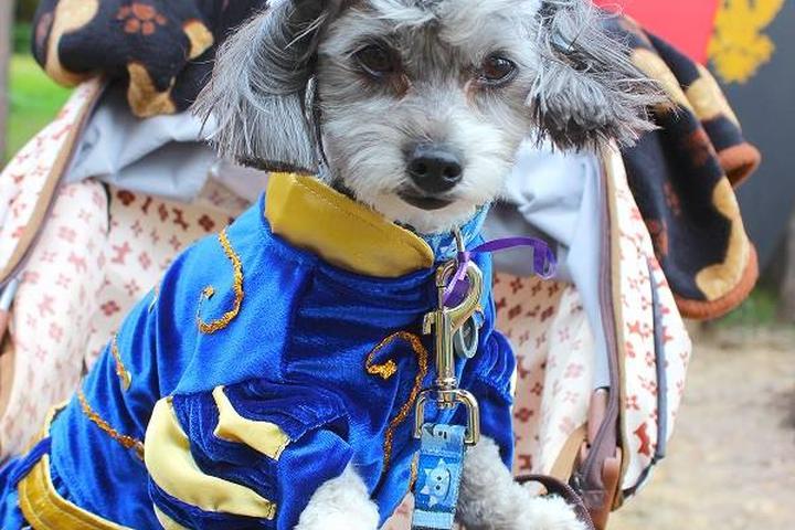 Pet Friendly Michigan Renaissance Festival