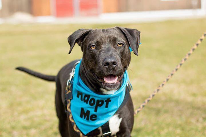 Dog Events in Millbury, MA