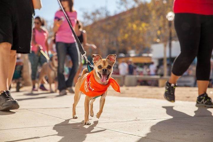 Dog Friendly Florida - Bring Fido
