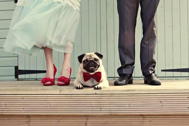 Pet Friendly Doggy Wedding Fair
