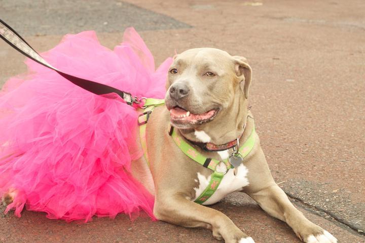 Pet Friendly SpringWine Fest