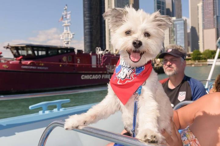 Pet Friendly Cruise with Roo