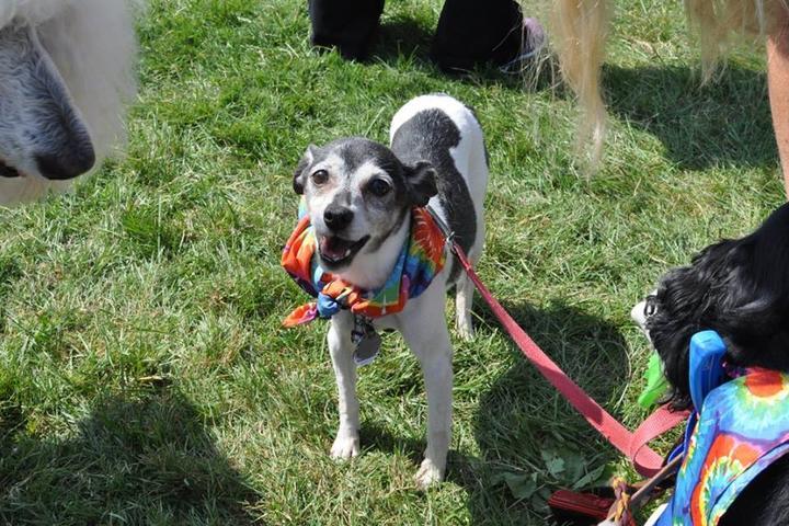 Dog Events in Ohio - Bring Fido
