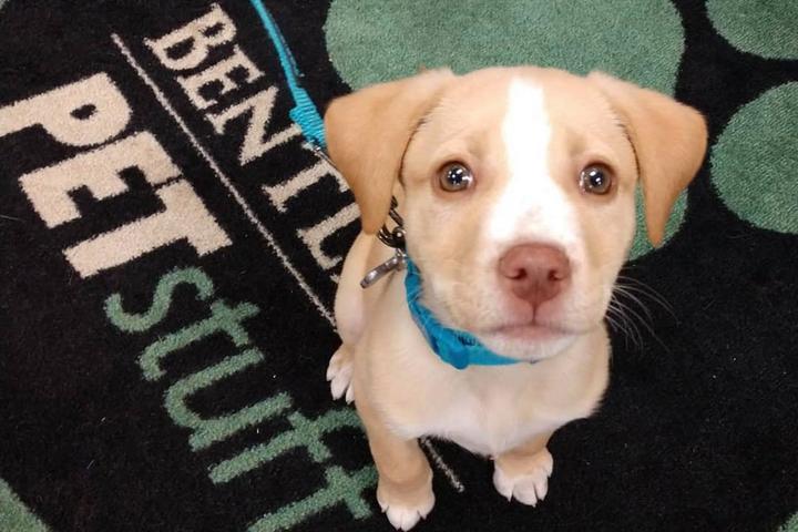 Pet Friendly Spring Clean Dog Wash at Bentley's Pet Stuff