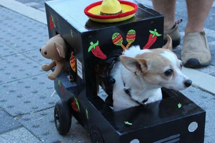 Top Dog Events Worldwide - Bring Fido