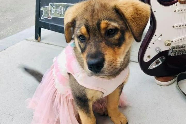 Pet Friendly First Thursday - Community Dog Stroll