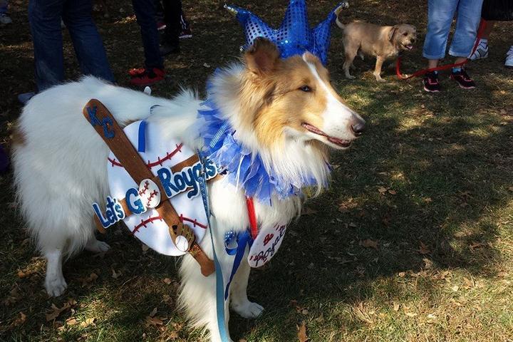 Pet Friendly DogtoberFest