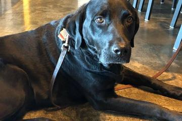 Pet Friendly Drinks and Dogs with Schlafly, The Watering Bowl & APA of MO