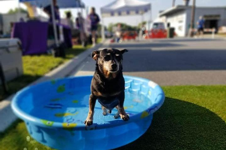 Pet Friendly Sip & Dip Pool Pawty