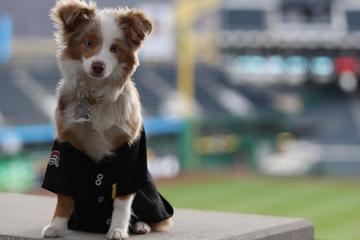 Pet Friendly Pup Night at PNC Park
