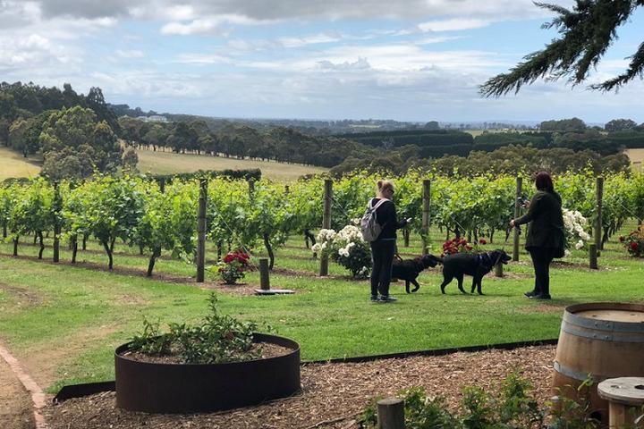Pet Friendly Doggy Winery Tour® - Yarra Trail