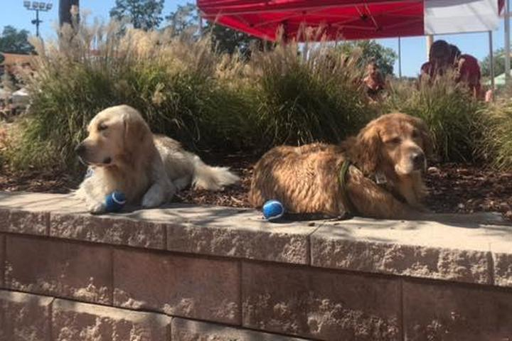 Pet Friendly Pooch Pool Party
