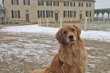 Pet Friendly All the President's Pups Tour