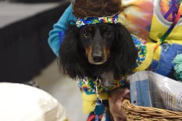 Pet Friendly Woofstock Atlantic City - A Dog, Art & Music Festival
