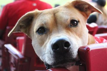Pet Friendly Bark in the Park with the Cincinnati Reds