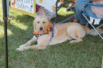Pet Friendly Barktoberfest Dog Walk & Festival
