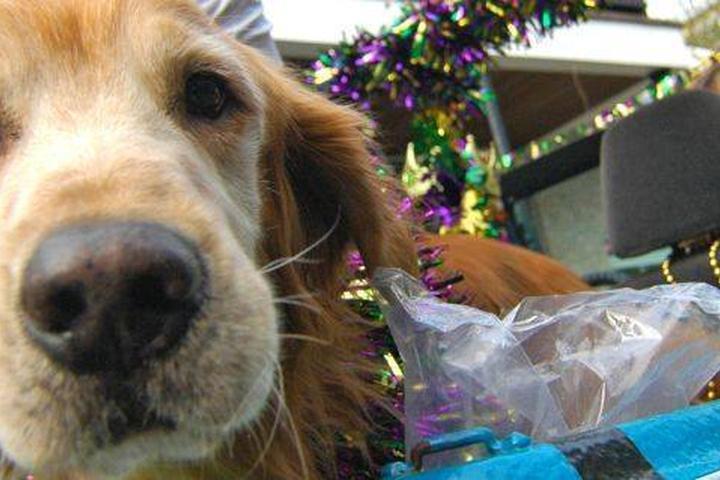 Pet Friendly Perfect Hues: Baytowne Art & Food Fest