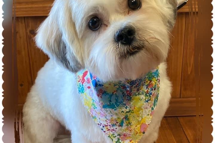 Pet Friendly Canine Design Grooming Studio