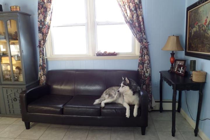 Pet Friendly Secaucus Airbnb Rentals