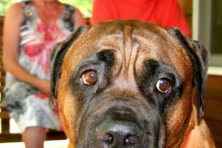 Pet Friendly Elkin Airbnb Rentals