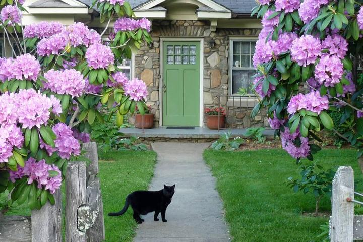 Pet Friendly Candler Airbnb Rentals