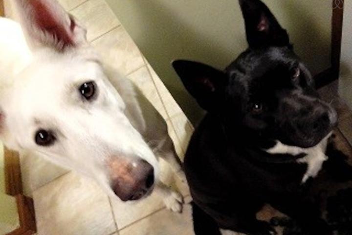 Pet Friendly Parma Airbnb Rentals