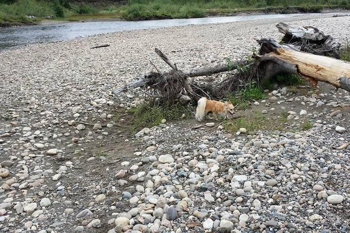 Pet Friendly Salmon River Picnic Shelter