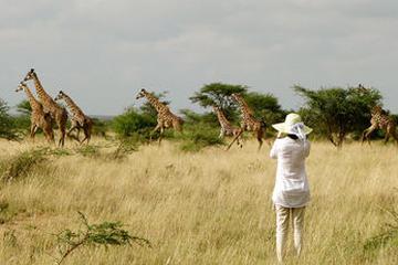 Pet Friendly Maasai Simba Camp