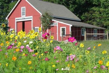 Pet Friendly Bryn Meadow Farm and B&B