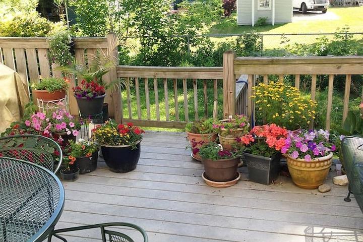 Pet Friendly North Hampton Airbnb Rentals