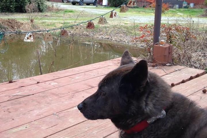 Pet Friendly Mebane Airbnb Rentals
