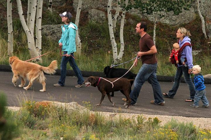 Pet Friendly Eleven Mile Campground
