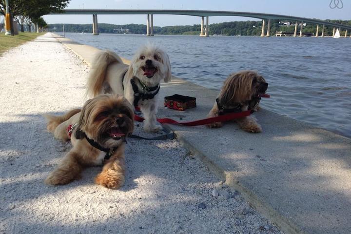 Pet Friendly Edgewater Airbnb Rentals