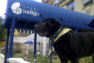 Pet Friendly Hotel Indigo Atlanta Midtown