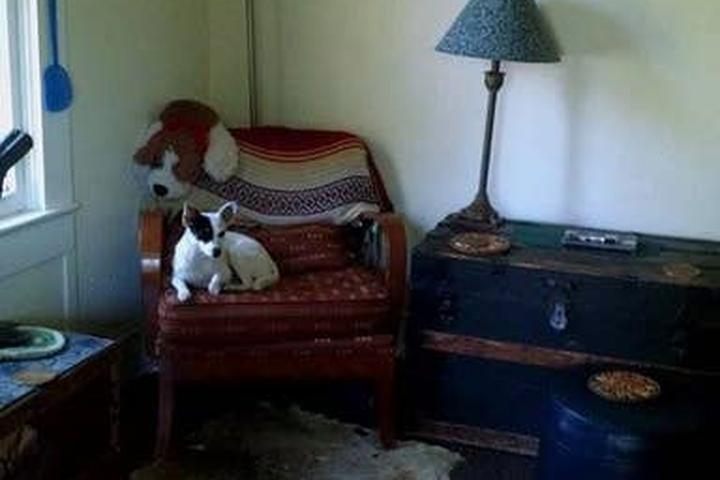 Pet Friendly Montverde Airbnb Rentals
