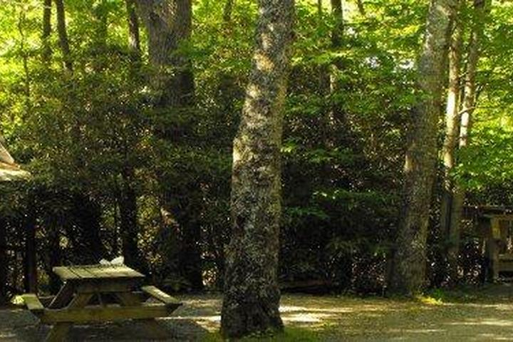 Pet Friendly Linville Falls Campground, RV Park & Cabins