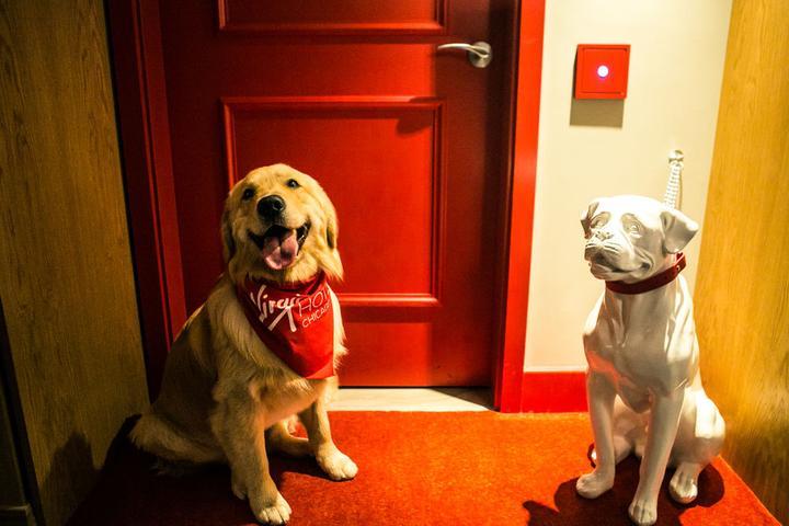 Pet Friendly Virgin Hotels Chicago
