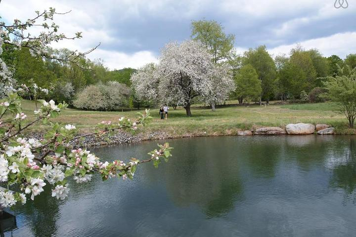 Pet Friendly Middletown Springs Airbnb Rentals